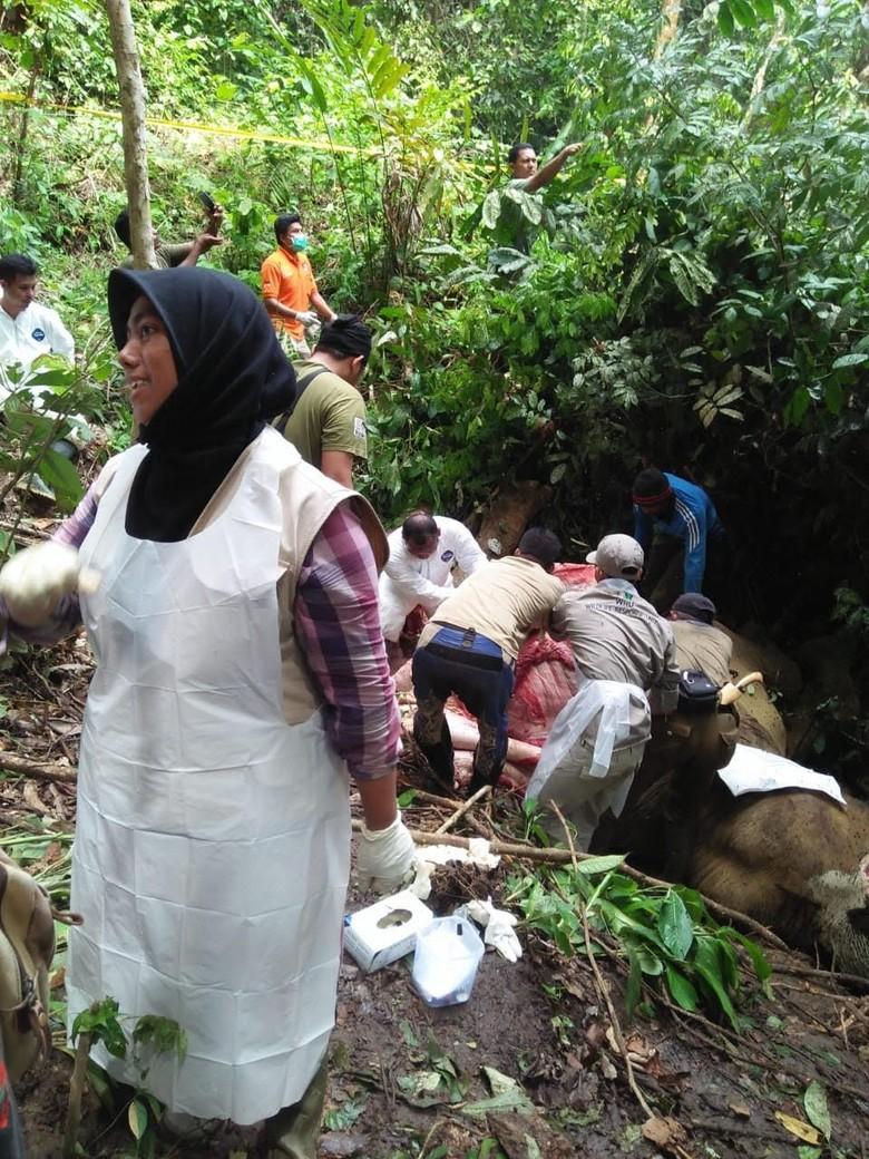 KLHK dan Polda Aceh Usut Tuntas Kematian Gajah Bunta