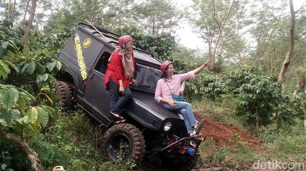 Libur Lebaran Seru di Semarang, Naik Jeep Keliling Kebun Kopi Banaran