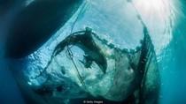 Memecahkan Teka Teki Kematian Lumba-lumba Ala Detektif Kriminal