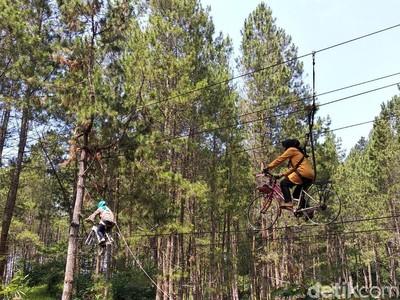 Mudik ke Sumedang, Ada Hutan Pinus Secantik Ini
