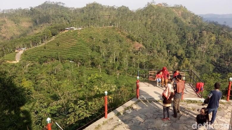Suasana objek wisata kebun teh di Nglinggo, Desa Pagerharjo, Kecamatan Samigaluh, Kulon Progo. (Eko Susanto/detikTravel)