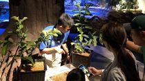 Ada Serangga Madagaskar di Jakarta Aquarium