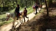 Libur ke Sulsel, Berkuda Mengelilingi Hutan Pinus yang Sejuk