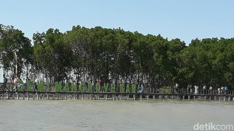 Wisata Dewi Mangrove Sari di Brebes (Imam/detikTravel)