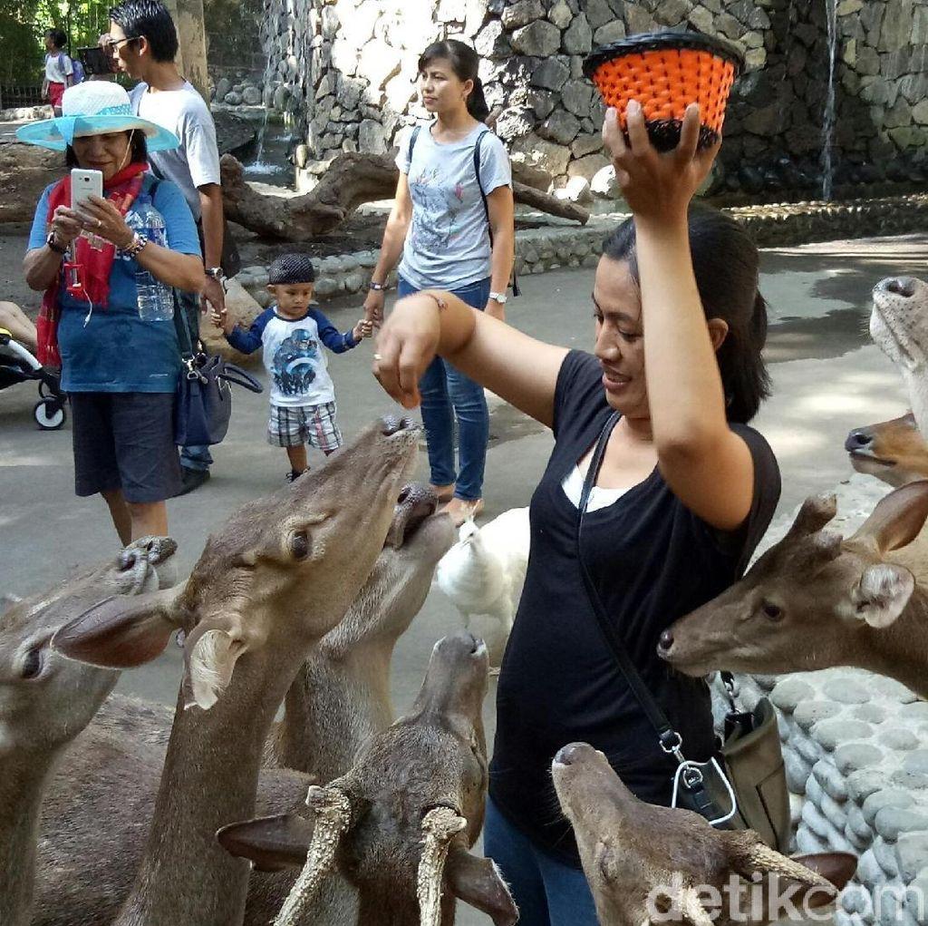 Liburan di Bali Zoo, Feeding Animal Jadi Favorit Pengunjung