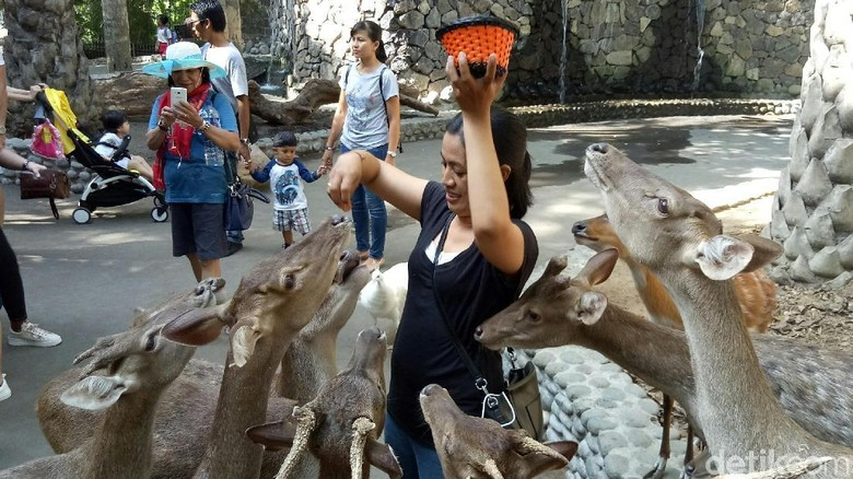 Wahana Feeding Animal di Bali Zoo (Nandhang/detikTravel)