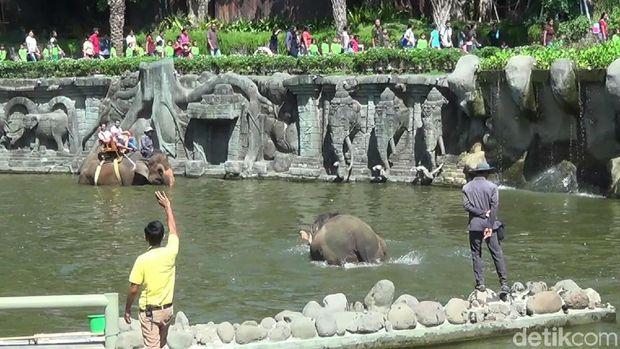 Naik gajah juga bisa (Nandhang/detikTravel)