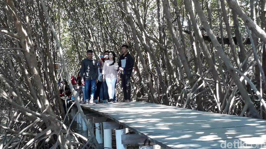 Hutan mangrove ini berada di Desa Kaliwlingi, Brebes. Tak sedikit pengunjung yang datang saat libur Lebaran ini (Imam/detikTravel)
