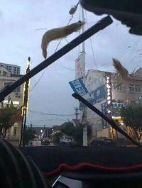 Unik Tapi Nyata, di China Ada Fenomena Hujan Seafood Segar