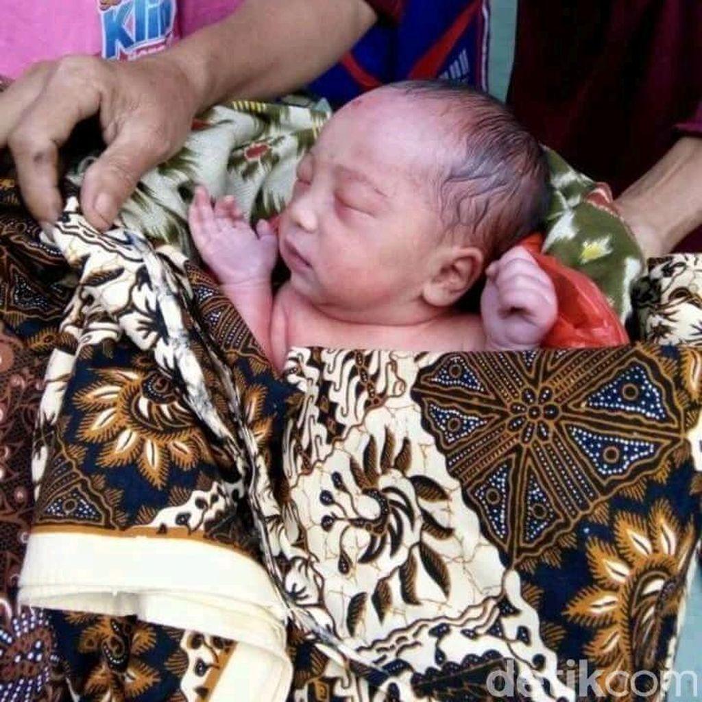 Diduga Dibuang, Bayi Perempuan Ini Ditemukan Dikerubuti Semut