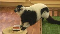 Lemur Prediksikan Rusia Akhiri Salah Cs di Piala Dunia 2018