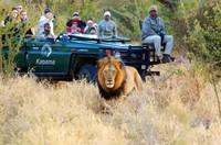 Afrika Selatan menempati peringkat kelima. Safari di Taman nasional Kruger jadi favorit traveler (Kruger National Park)