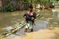 Salah satu korban banjir di India sedang mengevakuasi hewan ternaknya