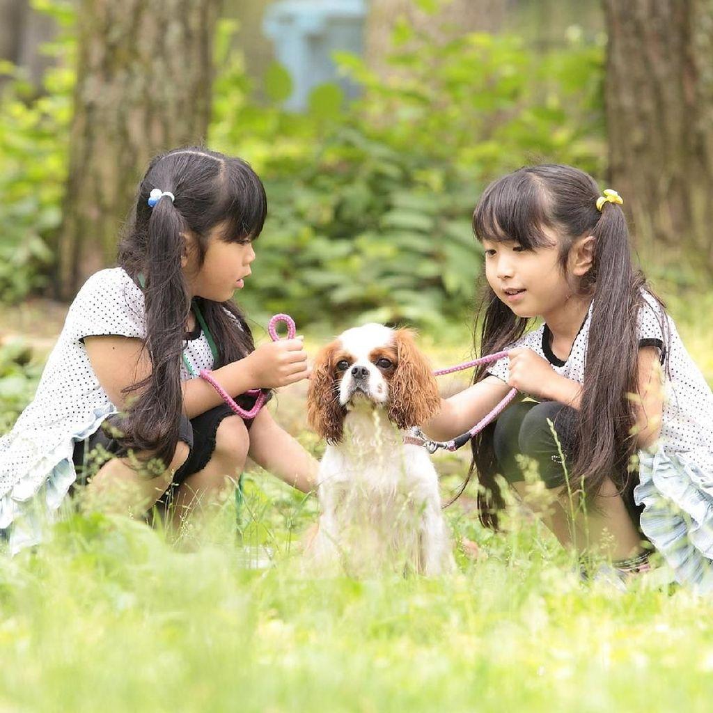Taman Rekreasi Ini Sewakan Anjing Buat Bermain