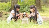 Guk! Guk! Taman Rekreasi Unik di Jepang Menyewakan Anjing