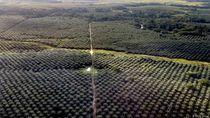 Miris! 80 Persen Taman Nasional di Riau Jadi Kebun Sawit Ilegal