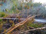 Cegah Kebakaran Hutan Jelang Kemarau, KLHK Lakukan Pemadaman Awal