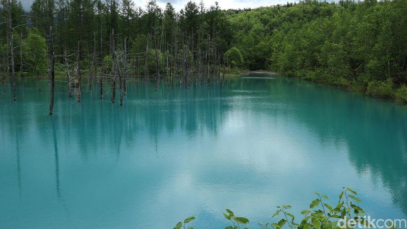 Selain wisata salju, Hokkaido juga menawarkan berbagai aktivitas dan wisata saat memasuki musim panas. Kunjungilah kolam berwarna biru di Biei dan taman bunga di kawasan Furano (Dina Rayanti/detikTravel)