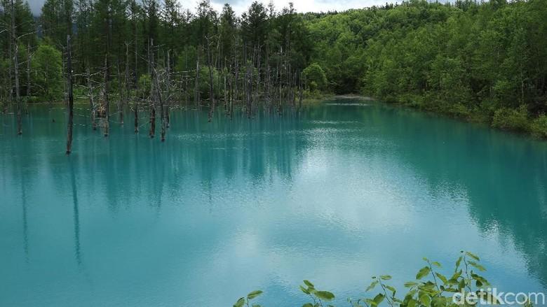 Blue Pond di Hokkaido, Jepang (Dina Rayanti/detikTravel)