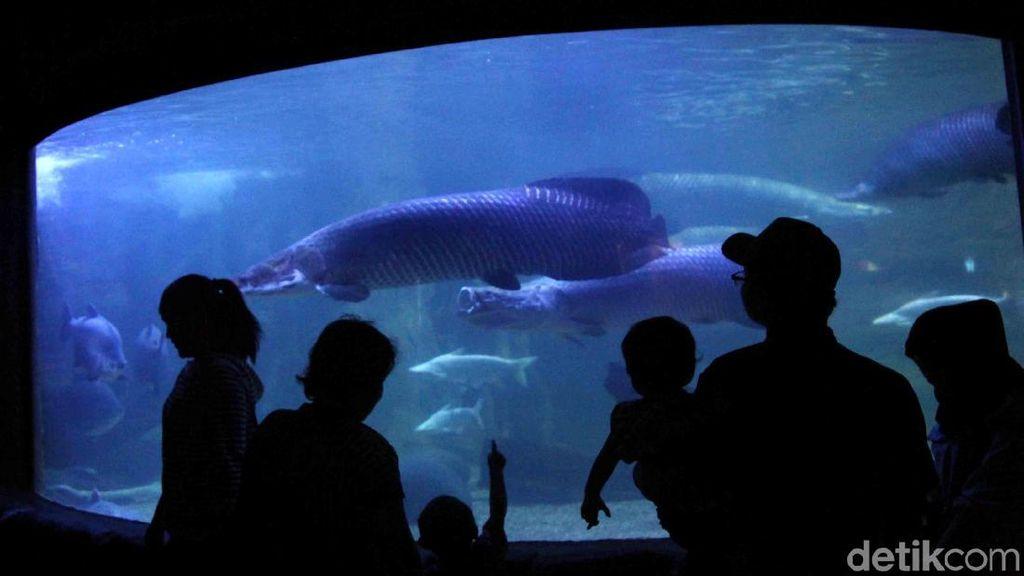 Liburan Akan Berakhir, SeaWorld Masih Ramai Pengunjung