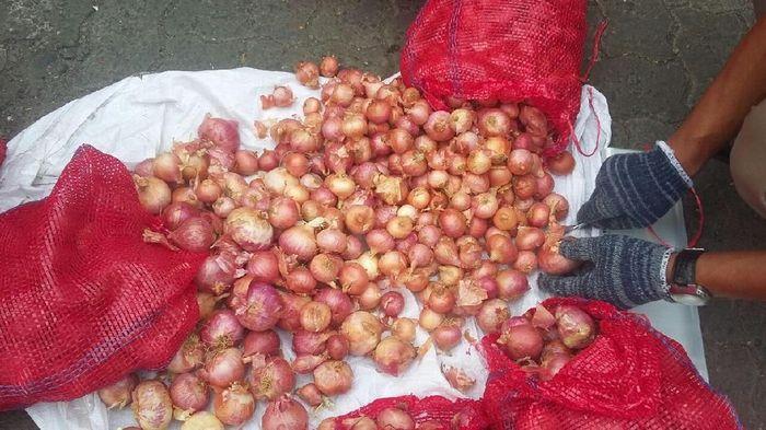 Bawang Merah Palsu/Foto: Dok. Kementan