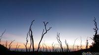 Hutan mati, Gunung Papandayan.