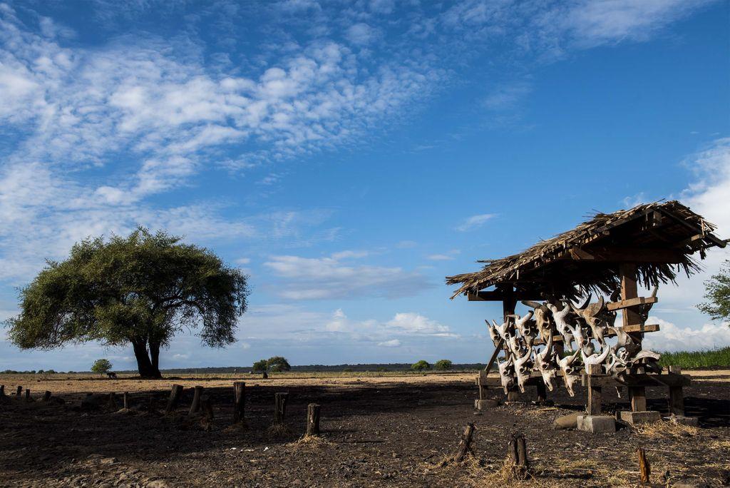 Burung merak melintas di padang sabana Bekol di Taman Nasional Baluran, Situbondo, Jawa Timur, Jumat (22/6). Kawasan yang memiliki luas 25 ribu hektar tersebut memiliki sekitar 444 jenis tumbuhan, 26 jenis mamalia, 155 jenis burung dan terdapat lokasi wisata bahari serta lokasi pengamatan burung migran. ANTARA FOTO/M Agung Rajasa/pd/18