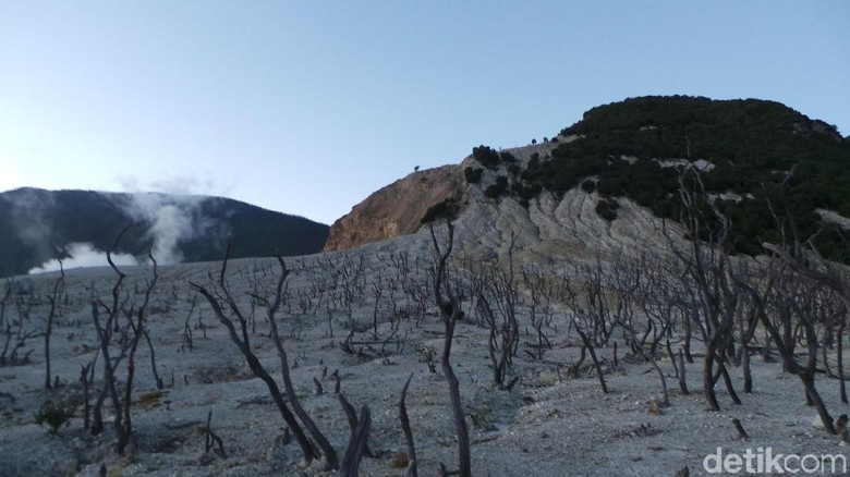 Hutan mati di Gunung Papandayan (Niken Purnamasari/detikTravel) (Niken Purnamasari/detikTravel)