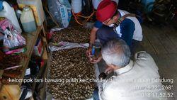 Kabupaten Bandung Jadi Target Swasembada Bawang Putih 2021
