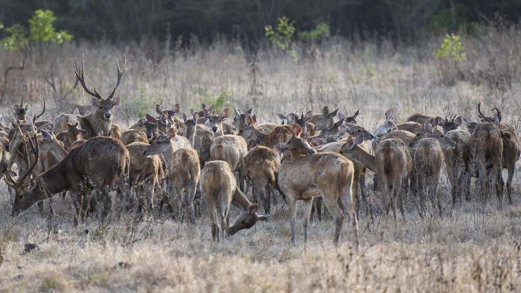 Pesona Taman Nasional Baluran