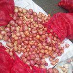 Harusnya Rp 7.000/Kg, Bawang Merah Palsu Dijual Rp 25.000/Kg