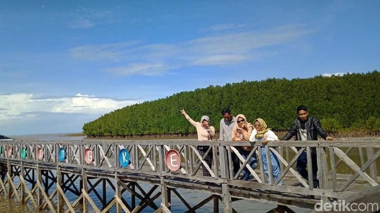 Foto: Wisata hutan mangrove di Sinjai (Ibnu Munsir/detikTravel)