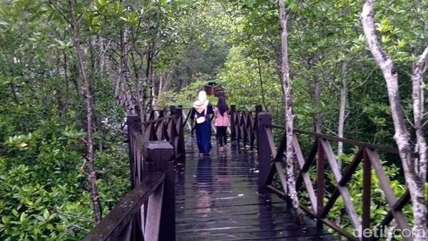 Tempat ini cuma 2 jam dari Langkat atau 3 jam dari Medan. Untuk menyusuri keindahan alam hutan mangrove, pengelola membuat jalan setapak terbuat dari kayu. (Datuk Haris/detikTravel)