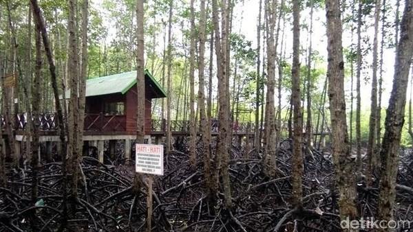 Buat kamu yang belum mengunjungi Hutan Manggrove Kota Langsa, bisa kesana usai mencoblos dalam pilkada. Dijamin asyik, seru dan ketagihan! (Datuk Haris/detikTravel)