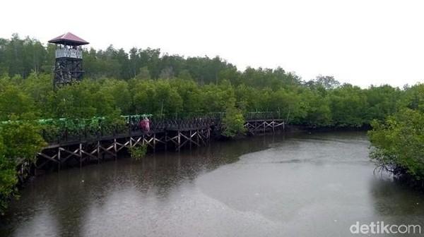 Inilah Hutan Mangrove Langsa di Kuala Langsa, Kecamatan Langsa Barat, Kota Langsa, Aceh. Bisa jadi pilihan liburan usai mencoblos di Pilkada Sumut (Datuk Haris/detikTravel)