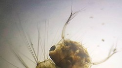 Kamu mungkin tahu kalau nyamuk suka bertelur di genangan air. Nah foto-foto ini jadi bukti tempat yang biasa jadi sarang nyamuk ketika tidak diperhatikan.