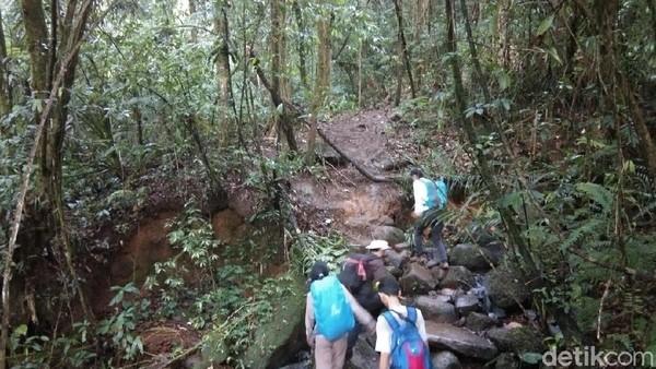 Vegetasi hutan gunung yang berada di Kabupaten Sukabumi dan Bogor ini terbilang masih masih sangat alami Jalurnya tidak terlalu terjal dengan batu-batuan yang disusun rapi sebagai jalan setapak (Muhammad Idris/detikTravel)