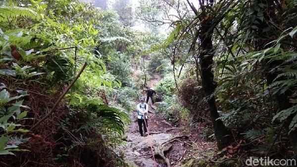 Di beberapa titik, jalan setapak pendaki pun bersimpangan dengan lintasan jelajah macan tutul. Bagi pendaki, ada dua alternatif jalur resmi yang bisa dilalui, yakni melewati Cidahu di Sukabumi dan Pasir Reungit di Bogor (Muhammad Idris/detikTravel)