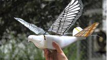 China Kerahkan Drone Berbentuk Burung Awasi Penduduk