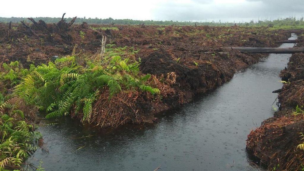 100 Ribu Orang Minta Vonis Rp 366 M Pembakar Hutan Dieksekusi