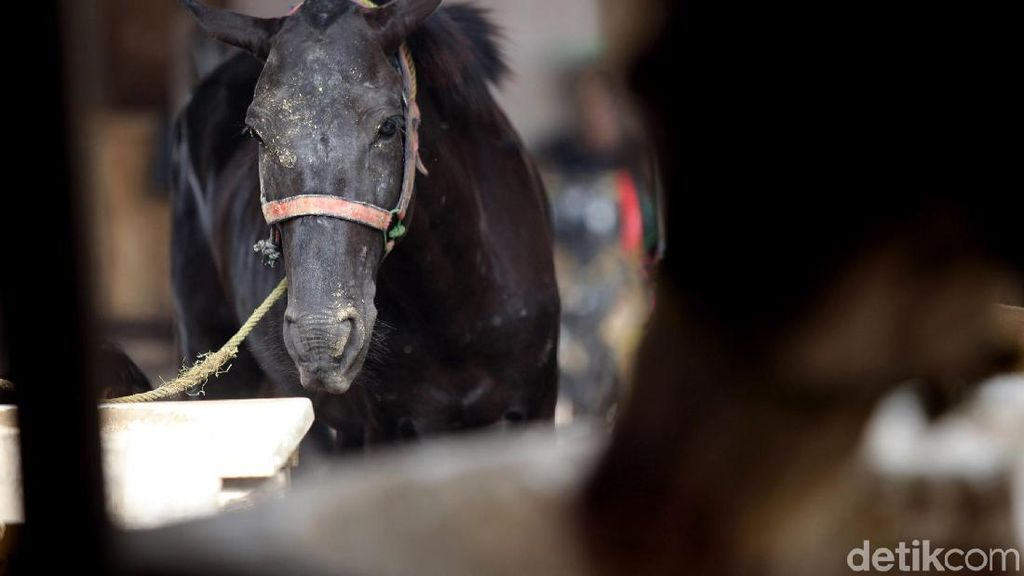 Video: Kuda Nyelonong ke Kafe, Pengunjung Pontang-panting