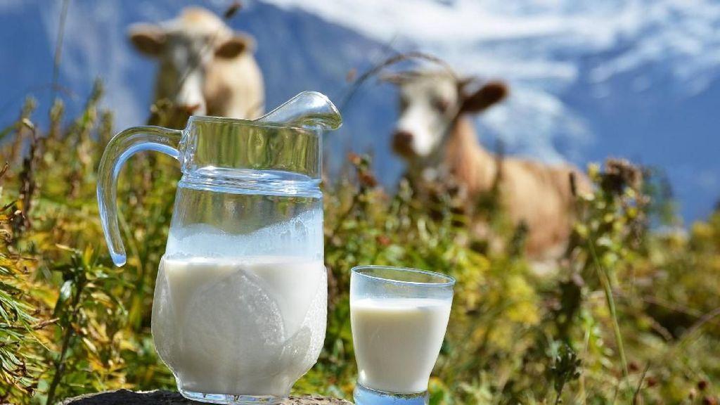 Pabrik Susu Ramah Lingkungan Ini Beroperasi dari Kotoran Sapi