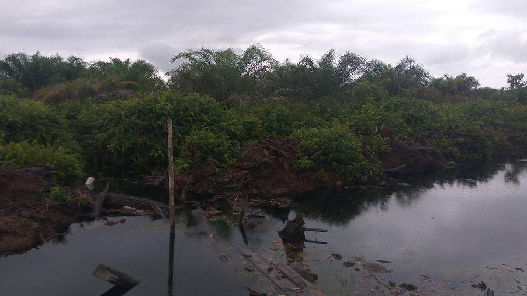 Pembakar Hutan Kembali Dihukum Rp 366 M, LSM: Segera Eksekusi!
