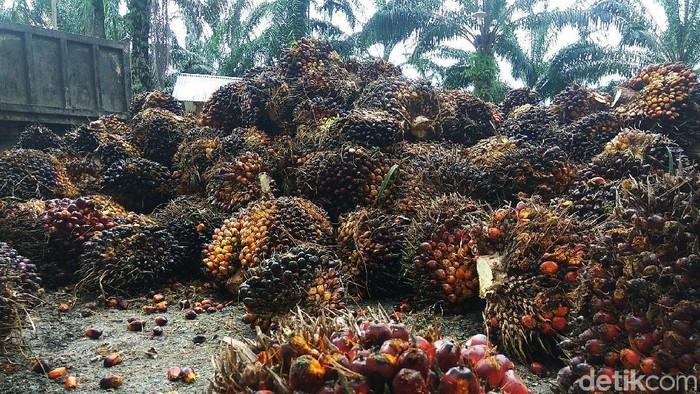 Harga kelapa sawit di Aceh turun