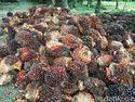 RI dan India Teken Kerja Sama Soal Minyak Kelapa Sawit