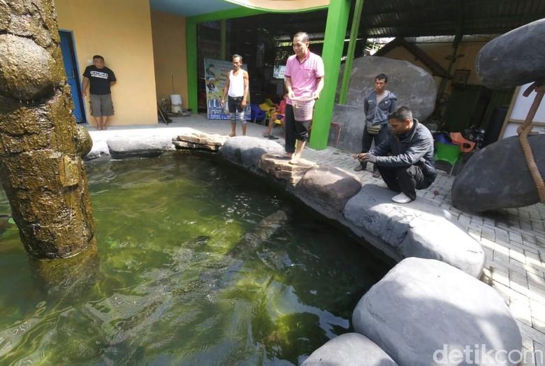 Unduh 66+ Gambar Ikan Arapaima Terbesar Di Dunia Terbaru
