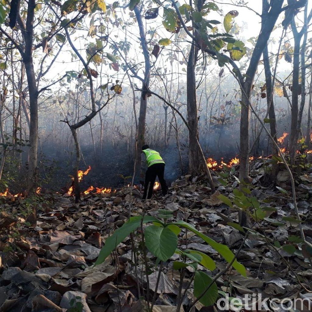 Perburuan Rusa Picu Hutan Arjuno Terbakar, Ini Upaya BPBD Pasuruan