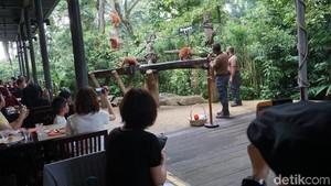 Makan Bersama Orangutan di Singapura, Bagaimana Rasanya?