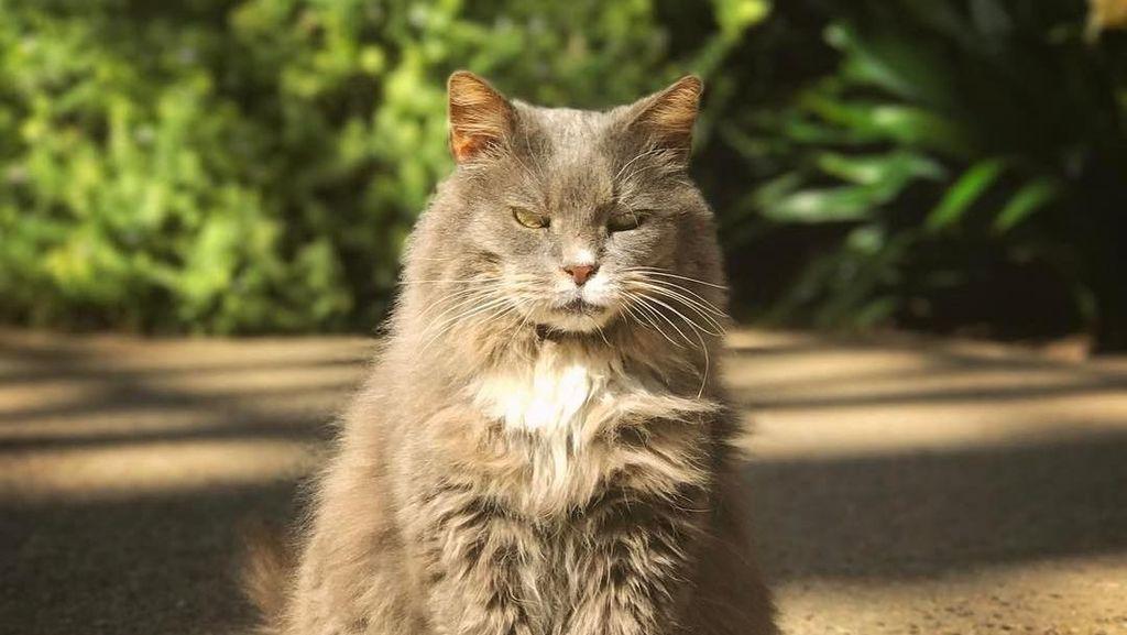 Gemas! Taman Bunga Ini Penjaganya Kucing