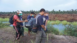 COP: 14 Orang Utan Mati Tak Wajar di Area Tanjung Puting